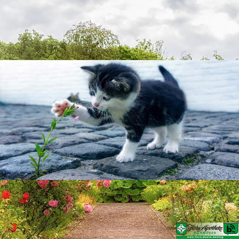 Pflanzenkraft für beste Freunde