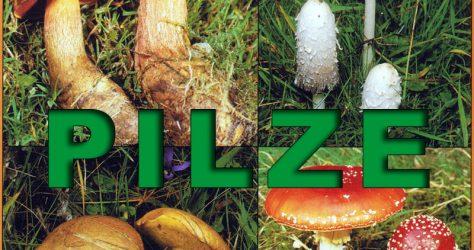 pilze-teaser