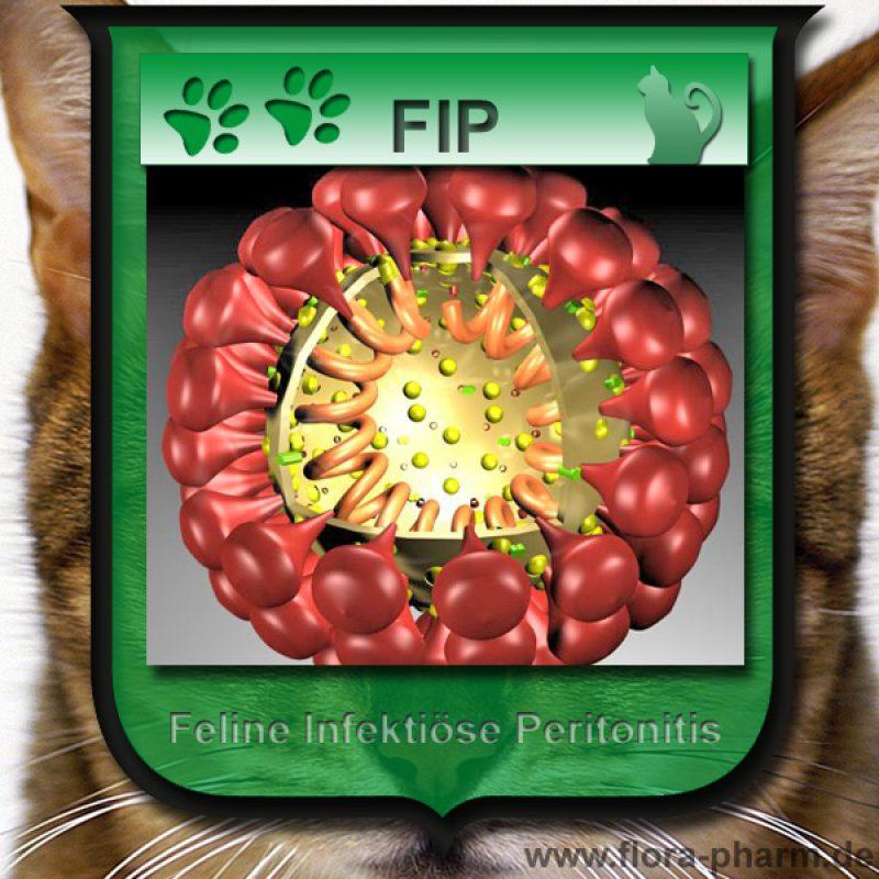 FIP v2