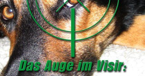 augenentzündung-hund