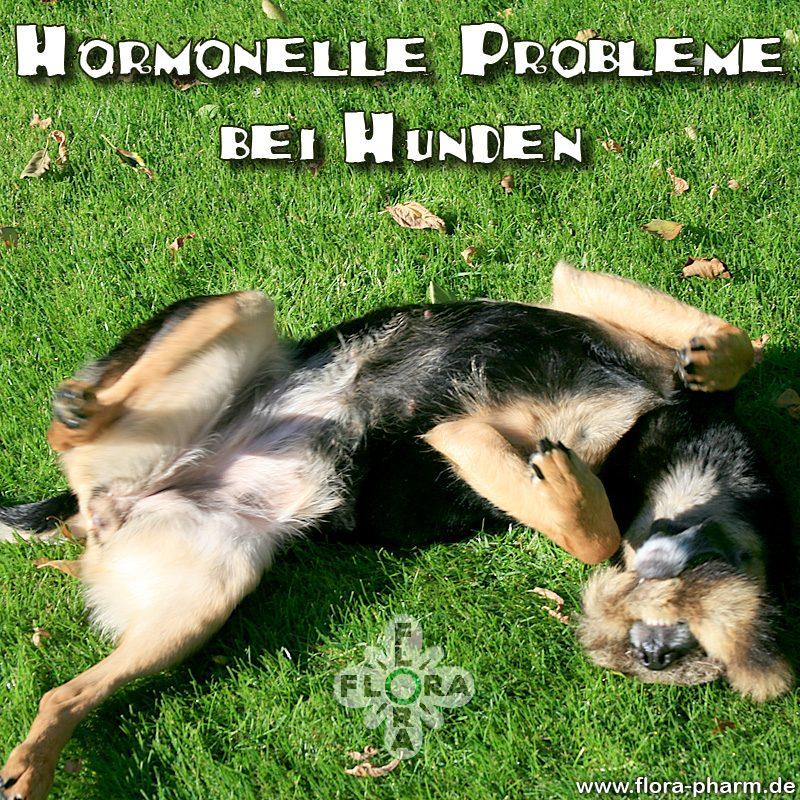 Hund Hormonprobleme