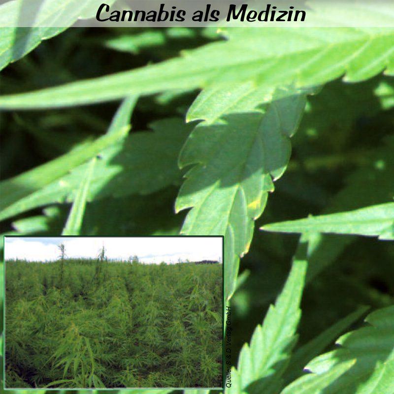 arzt der cannabis verschreibt