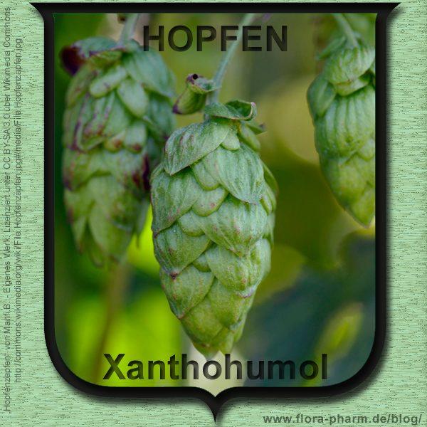 hopfen-xanthohumol