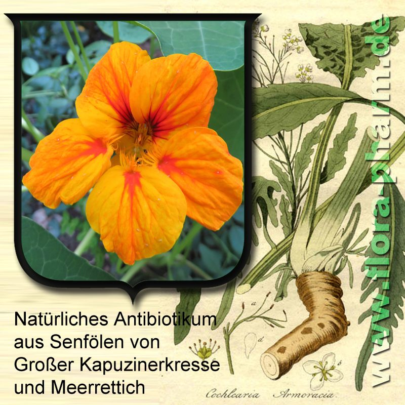 natuerliches-antibiotikum