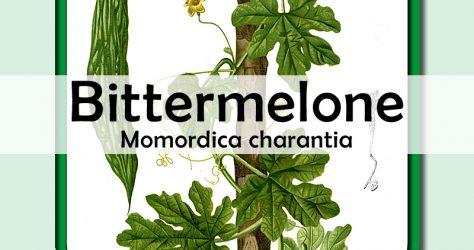 bittermelone