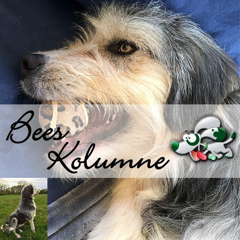 bees-kolumne