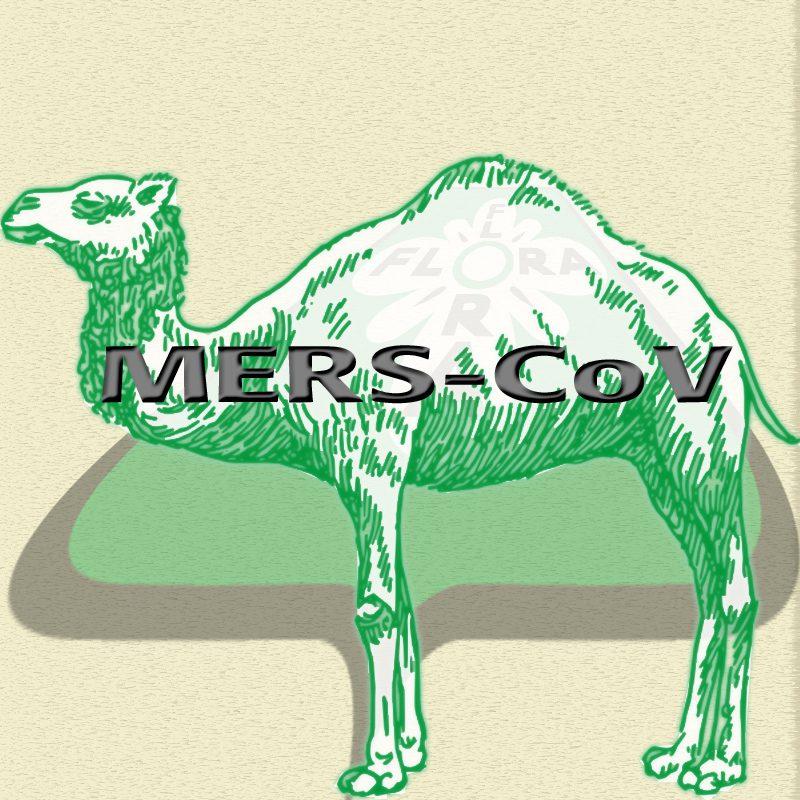 mers-kamel