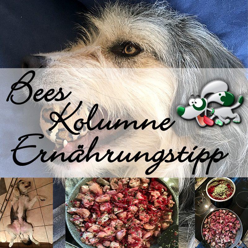 bees-kolumne-ernaehrungstipp