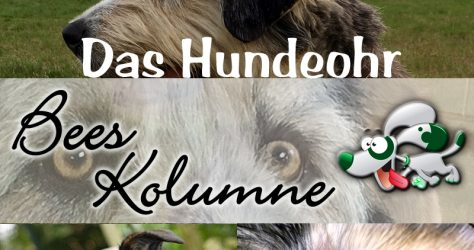 bees-kolumne-OHR