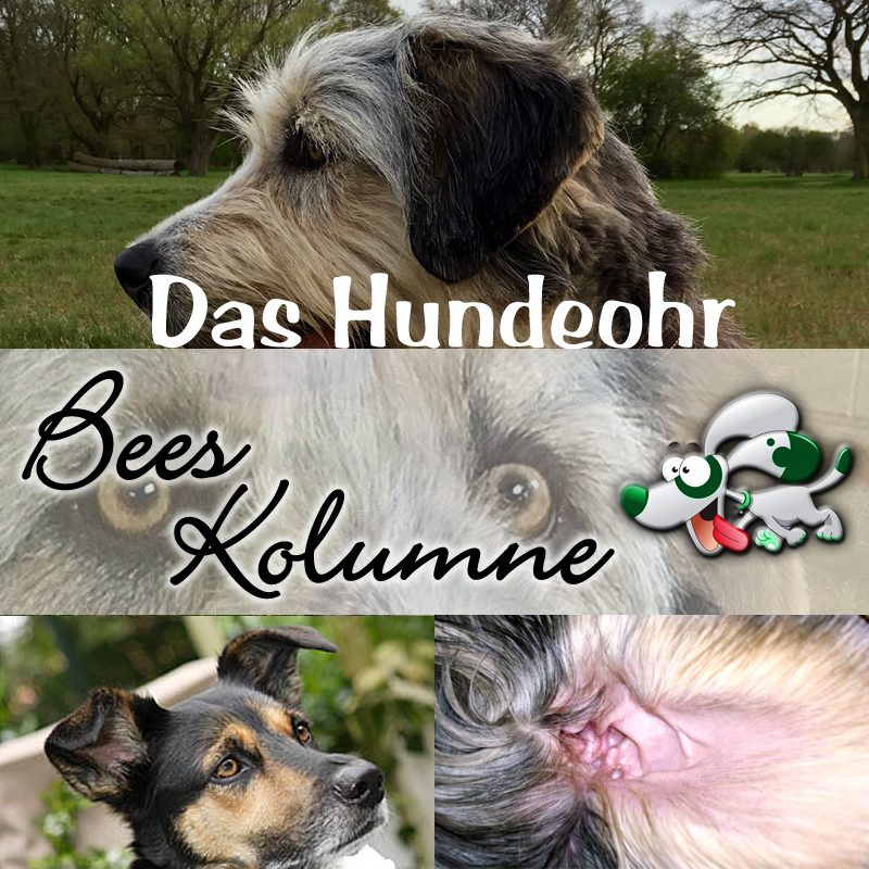 Hundeohren Pflegen Flora Apotheke Hannover