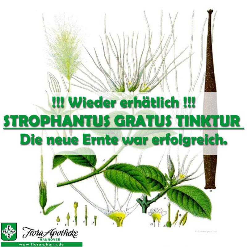 Strophanthus gratus Tinktur wieder verfügbar, die neue Ernte war erfolgreich
