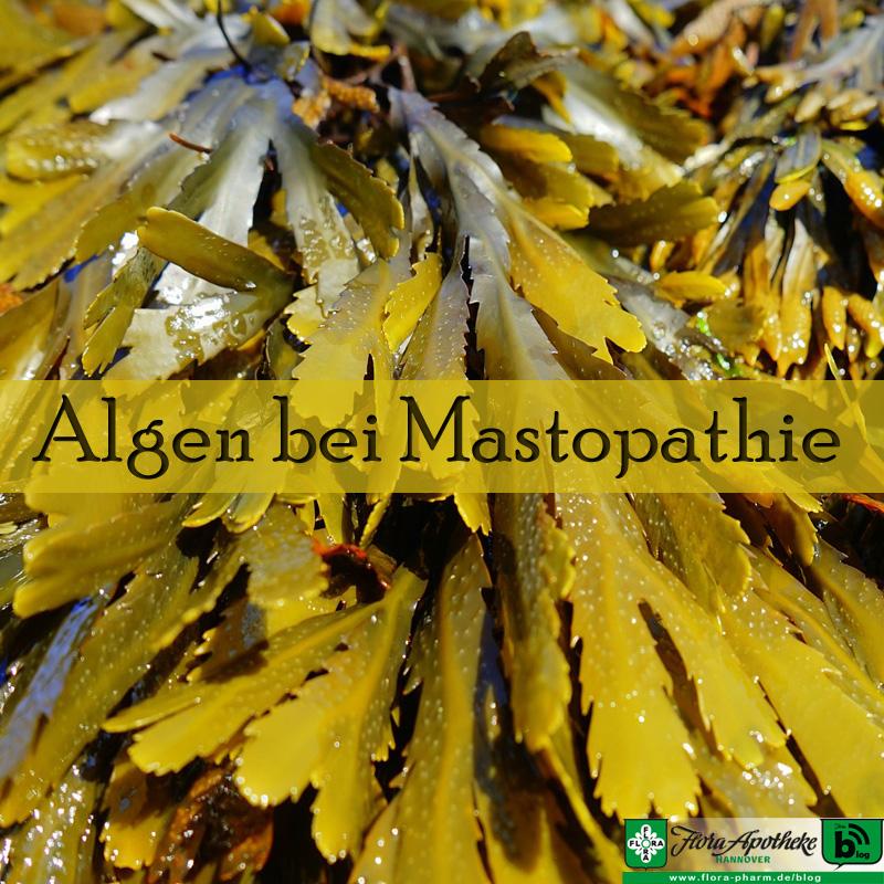 Algen bei Mastopathie