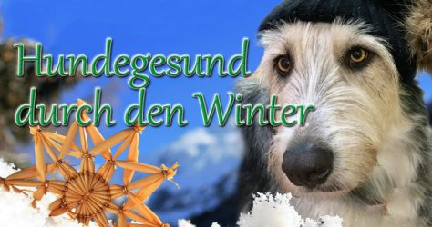 hund gesund winter