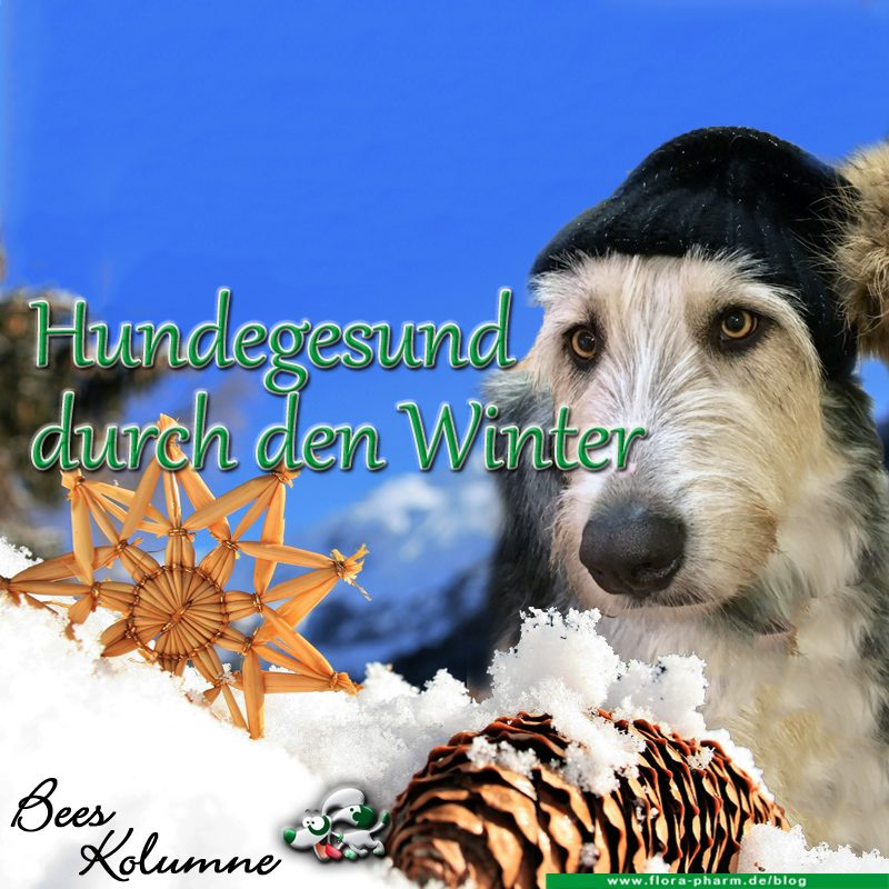 hund gesund winter