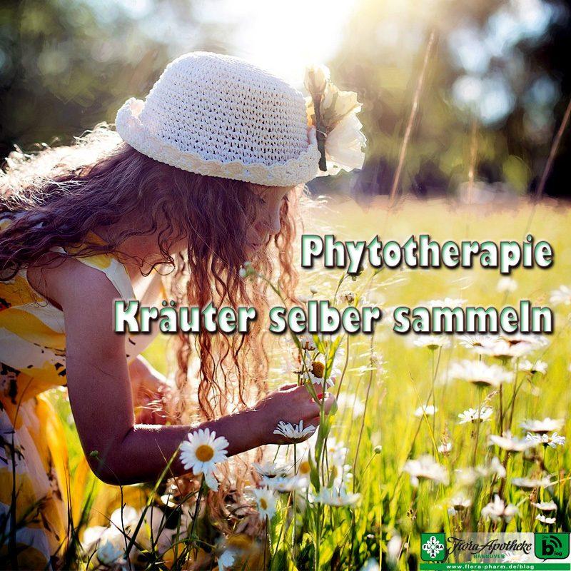 phytotherapie - kraeuter sammeln