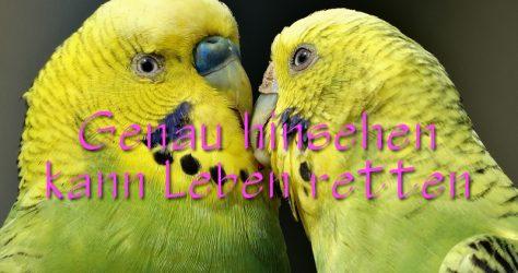 Krankheiten bei Ziervögeln erkennen