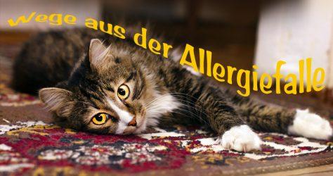 Haustier Allergie