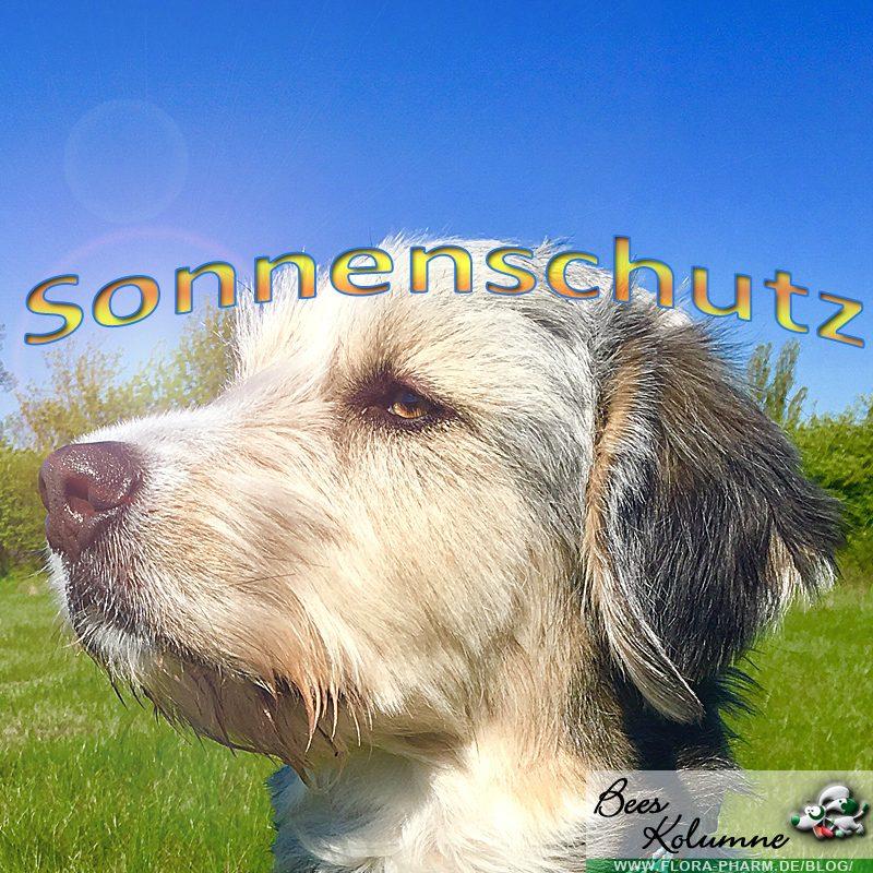 Sonnenschutz für die Hundenase