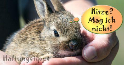 Kaninchen können nicht schwitzen