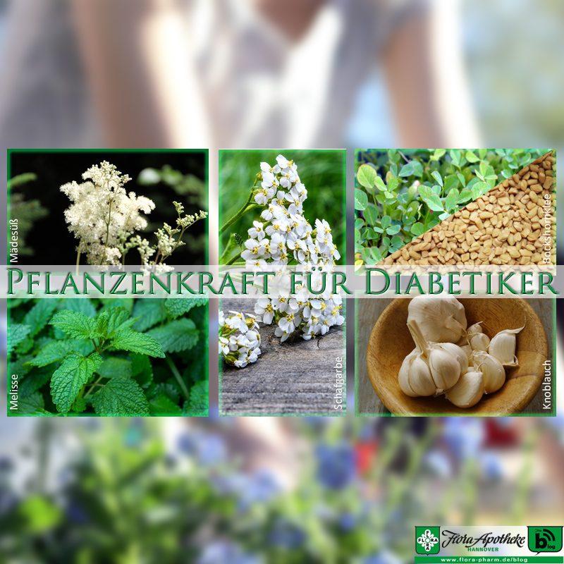 Pflanzenkraft für Diabetiker - Phytotherapie/Pflanzenheilkunde