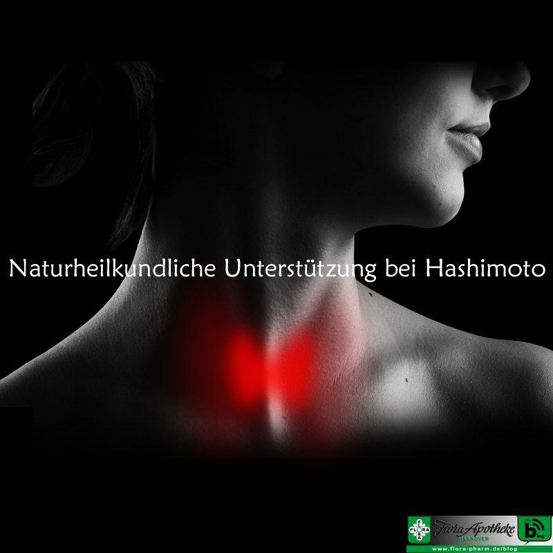 Schilddrüse Hashimoto Progesteron