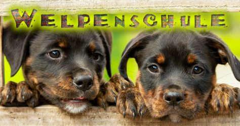 Welpenschule Hundeerziehung