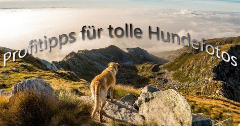 Tipps für tolle Tierfotos