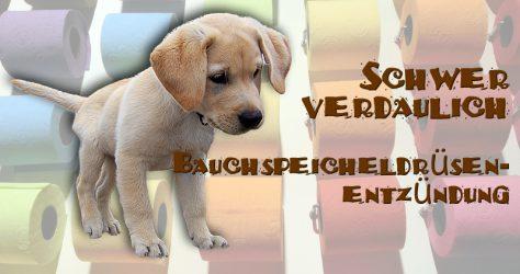 Bauchspeicheldrüsenentzündung beim Hund