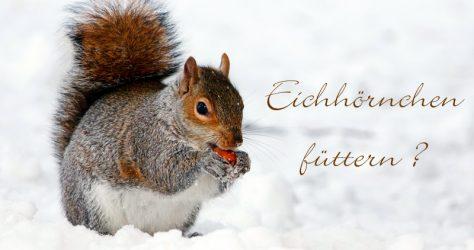 Eichhörnchen richtig füttern