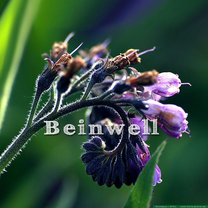 Beinwell