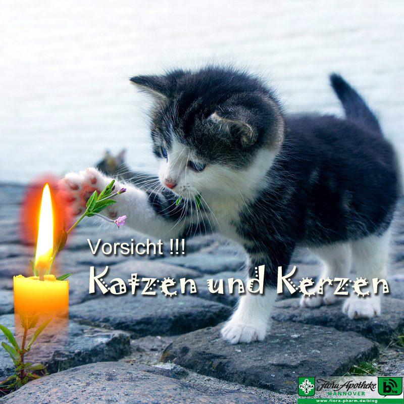 Katzen und Kerzen
