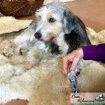 Krallenpflege Hund mit Schleifmaschine