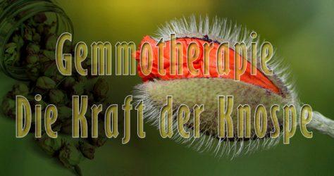 Gemmotherapie - Flora Apotheke Hannover