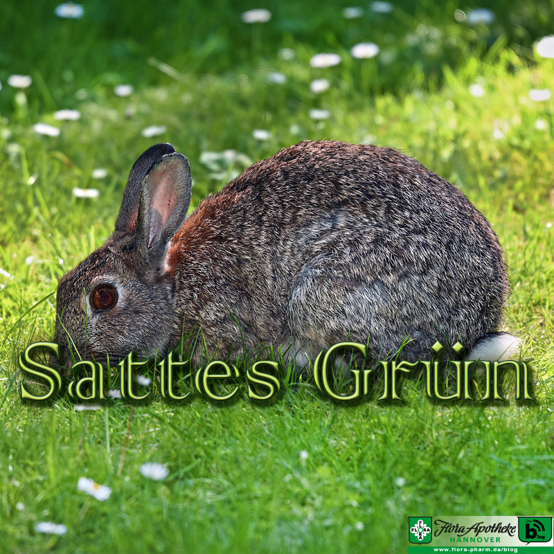 Kaninchen essen gern sattes Grün