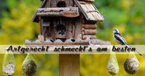 Vögel füttern - aber artgerecht