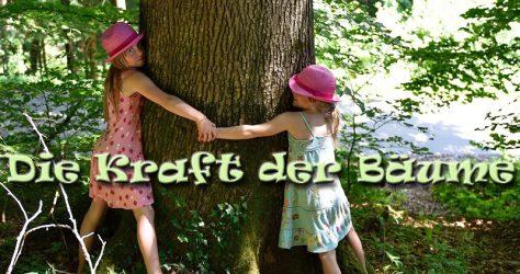 Die Kraft der Bäume