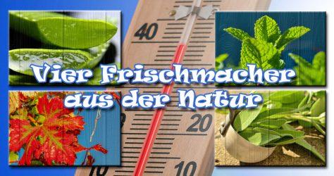 4 Frischmacher: Aloe Vera, Pfefferminze, Weinlaub, Salbei