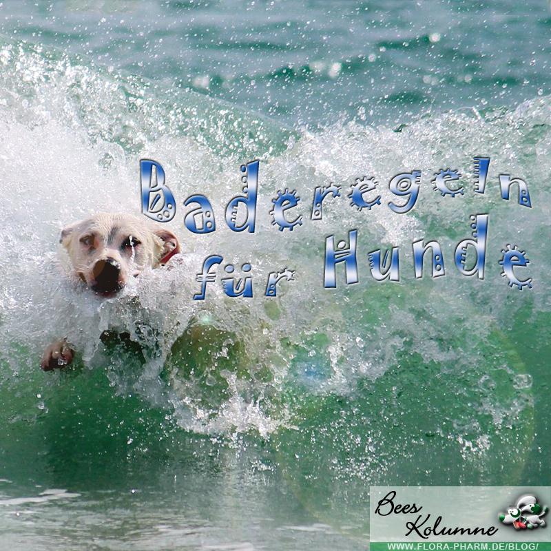 Baderegeln für Hunde