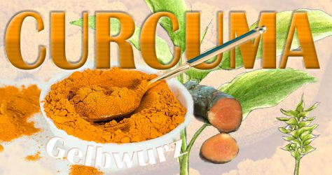curcuma-kurkuma-gelbwurz