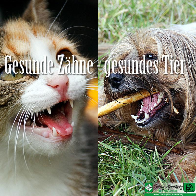 Haustier Zahngesundheit