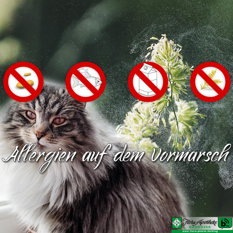 Allergien auf dem Vormarsch