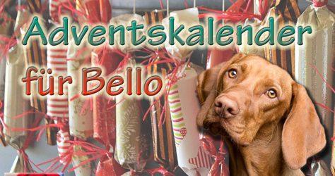 Adventskalender für den Hund basteln