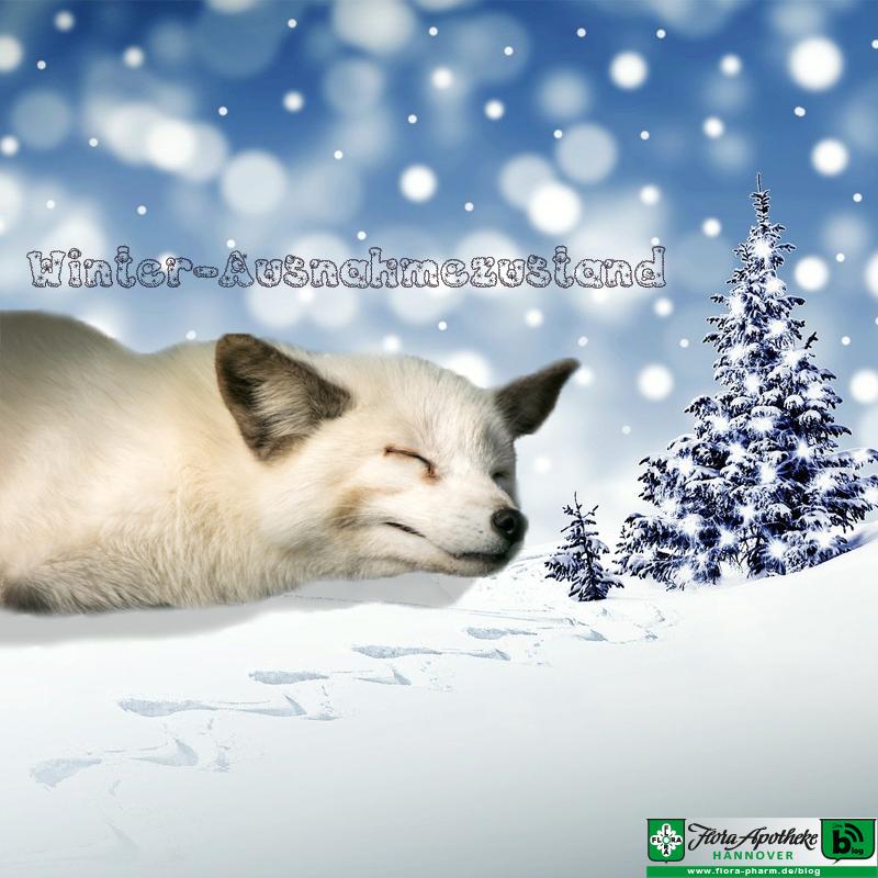 winterschlaf
