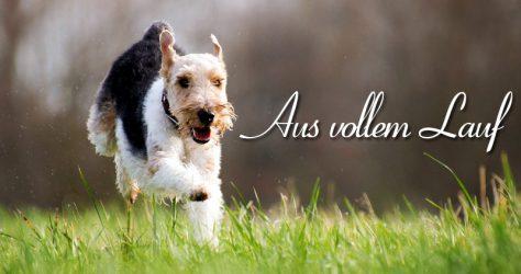 Hund Lauf Rumtollen Zerrung Prellung