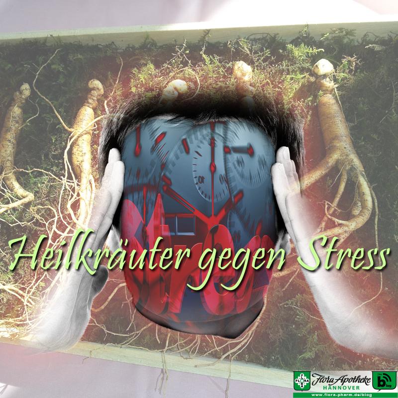 Kräuter gegen Stress