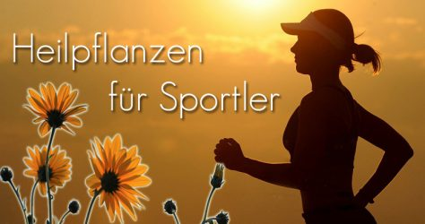 Heilpflanzen für Sportler