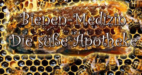 Bienen-Medizin, die süße Apotheke
