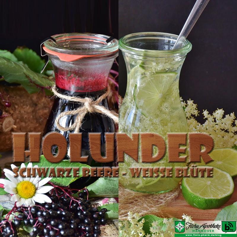 Holunder (Beere & Blüte)