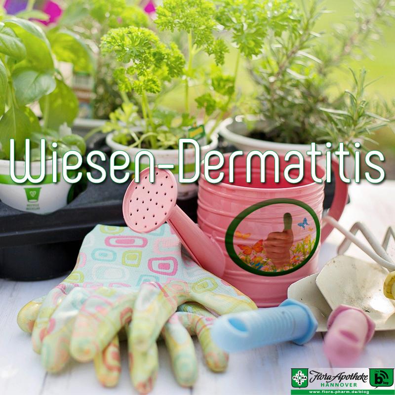 Wiesen-Dermatitis