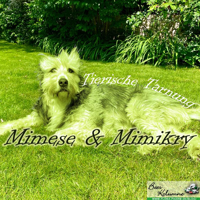 Tierische Tarnung: Mimese & Mimikry